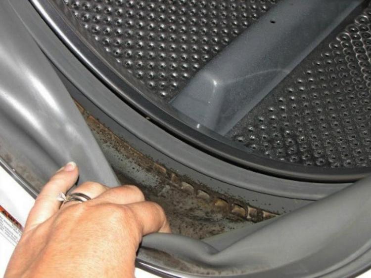 Плесень и гробок в стиральной машине